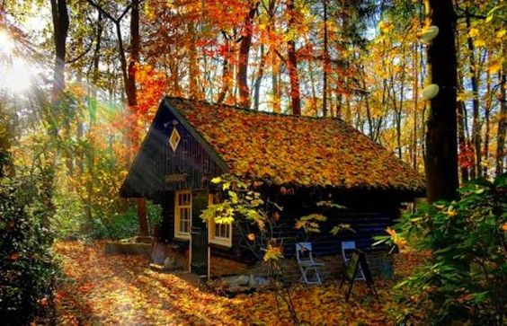 autumn-fall-leaves-house