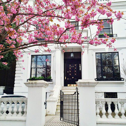 townhome & cherry blossom flowers