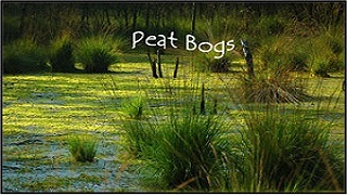 peat-bogs-320x180