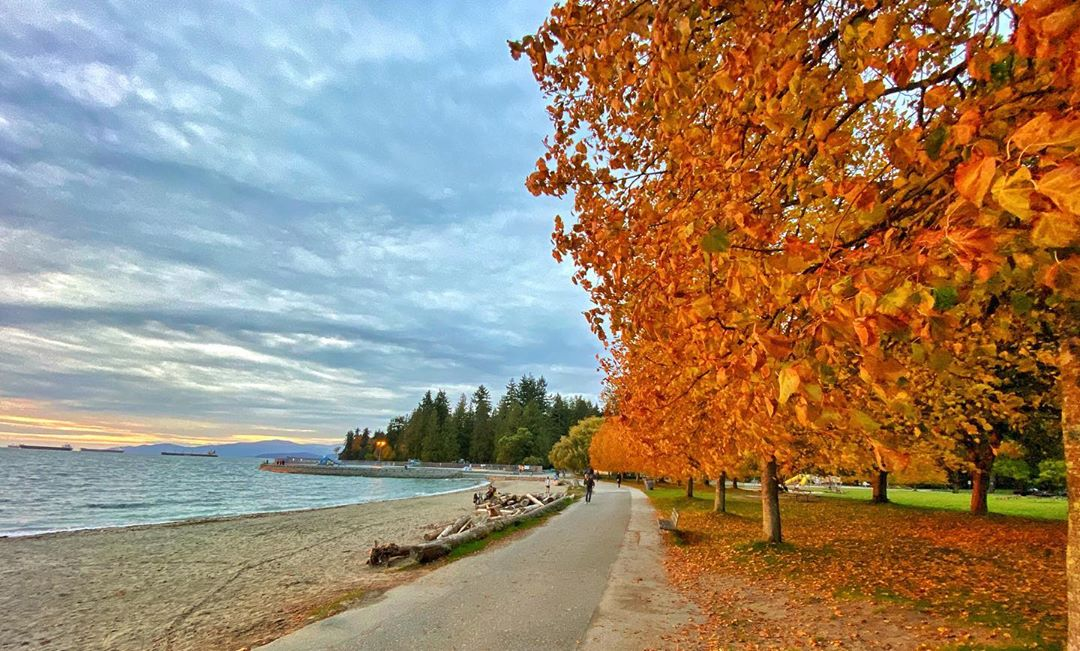 Fall in Vancouver - colorful leaves